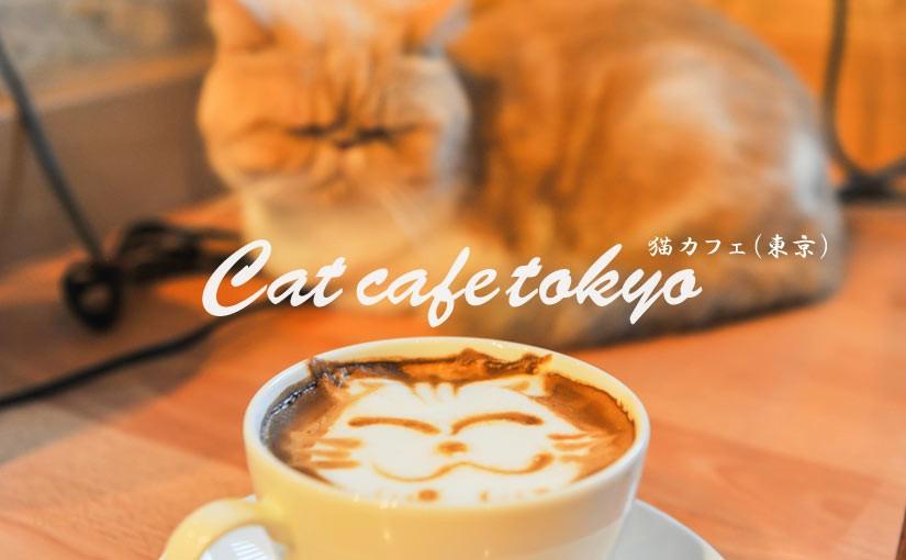 【東京の猫カフェ】猫と癒しの時間を共有できるおすすめ店7選